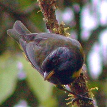Aves&Conservación (Birdlife Ecuador)