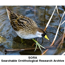 Searchable Ornithological Research Archive